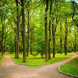 В окружении парков